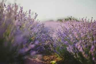Photo by Natalie on Pexels.com